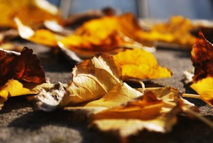 Leaves - Estate Planning-main page